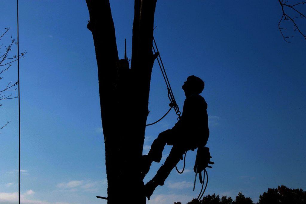 Un arboriste grimpeur en Alsace