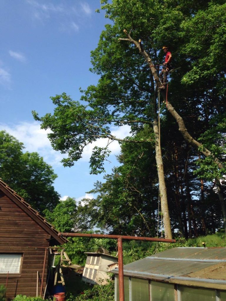 Abattage d'arbre Kaysersberg