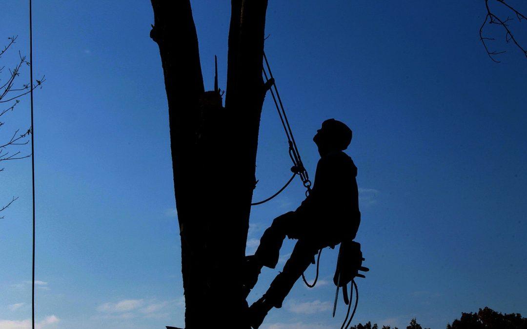 arboriste grimpeur en Alsace
