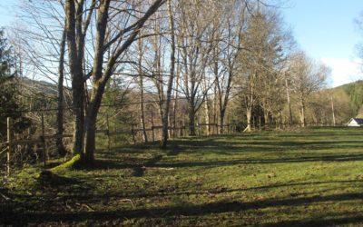 Vos travaux forestiers à Kaysersberg